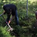 Setzlinge pflanzen - ROHHOLZ Plant Trees