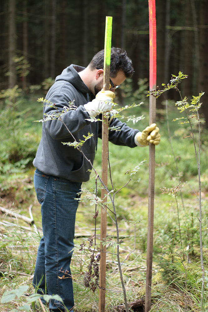 Pflanzmarkierung - Rohholz Plant Trees