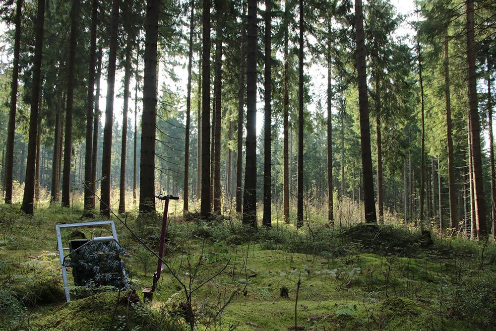 Plant Trees 2016 - Rohholz Baumpflanzaktion