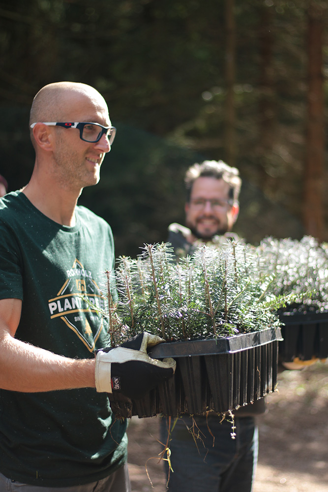 Setzlinge im Körbchen - Plant Trees 2016 - Rohholz Baumpflanzaktion