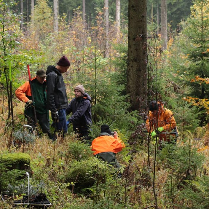 Plant Trees 2017 - Rohholz Team