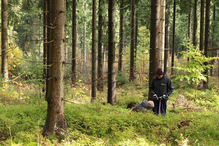 eingepflanzt - Rohholz Baumpflanzprojekt