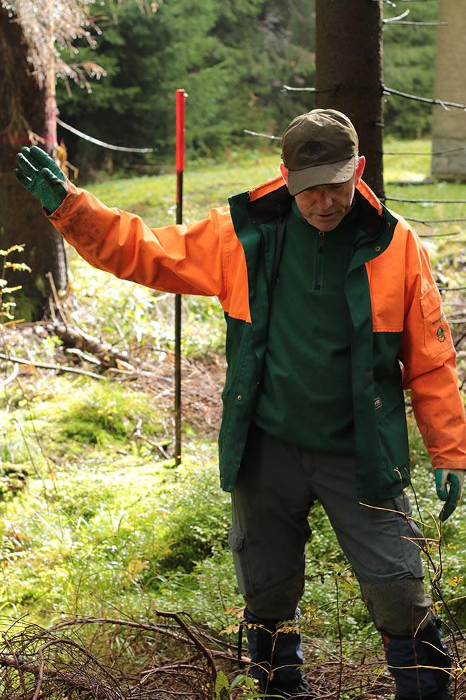 Forstleitung - Rohholz Plant Trees