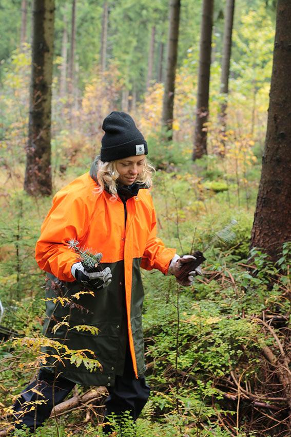 Handvoll Bäume - Rohholz Plant Trees