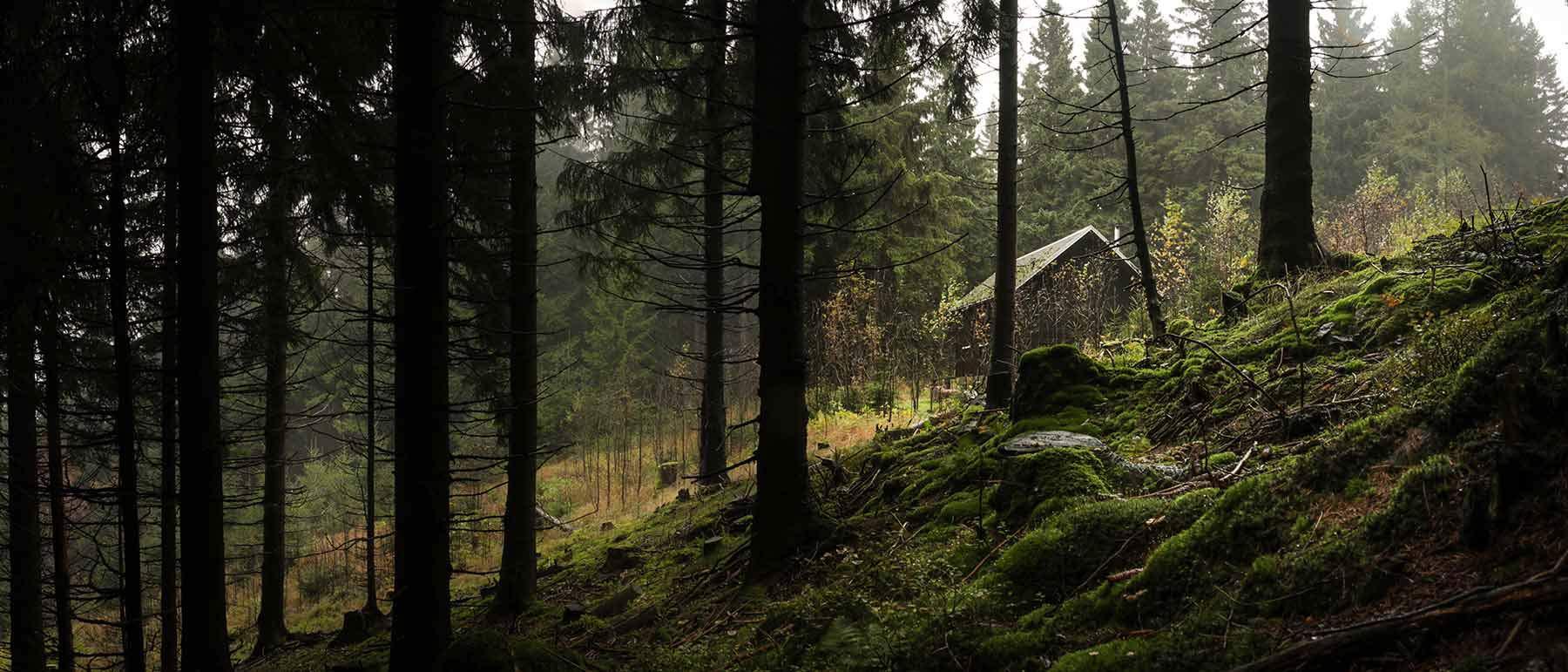 Waldhütte - Rohholz Plant Trees