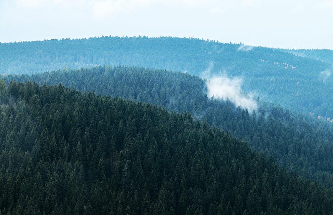 Waldfarben - Rohholz