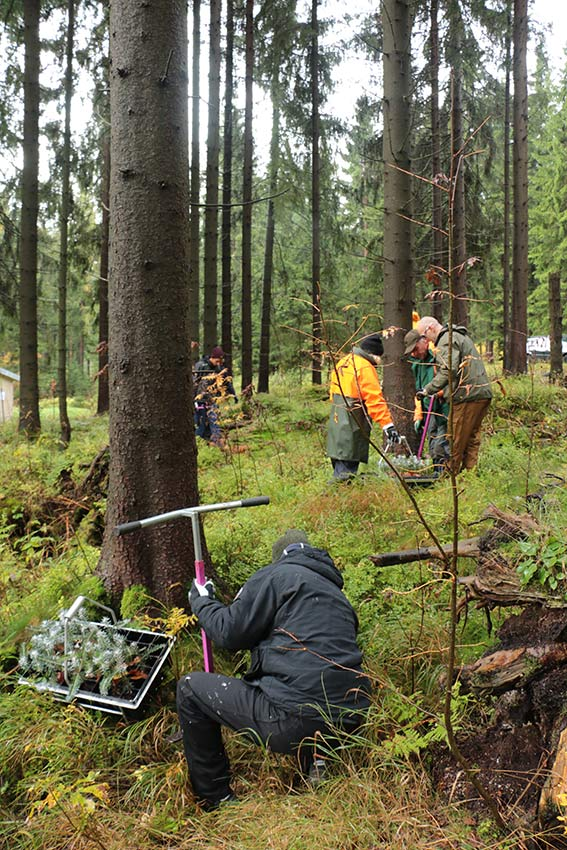 Verbissschutz - Rohholz Baumpflanzprojekt
