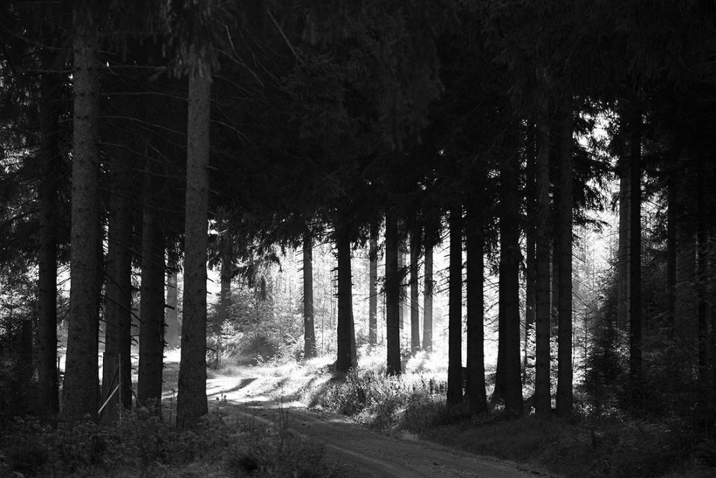 Licht im Forst - Rohholz Plant Trees 2018