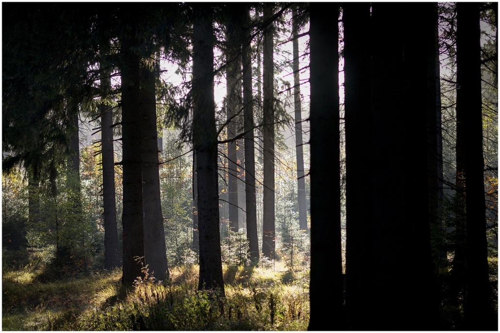 Waldlicht - Rohholz Plant Trees 2018