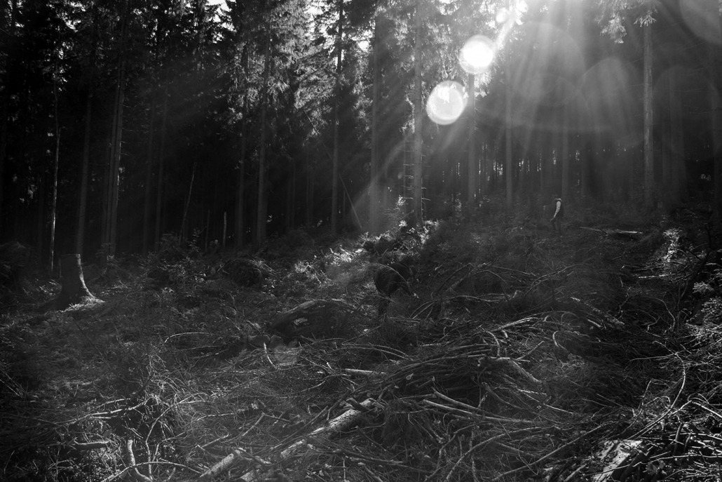 Reisig - Rohholz Plant Trees 2018