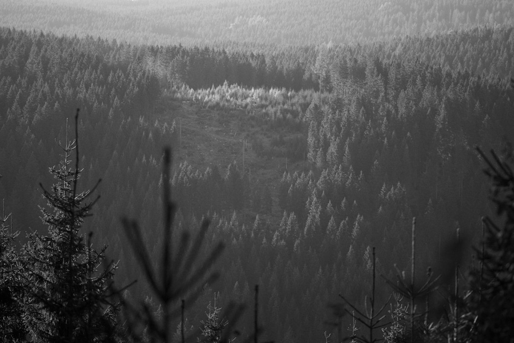 Sturmschaden - Rohholz Plant Trees 2018