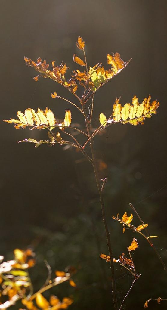 sunlight tree - Rohholz Plant Trees 2018